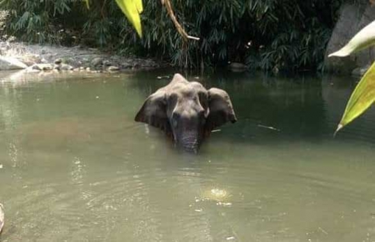 B'wood wants stricter laws after brutal death of pregnant elephant in Kerala