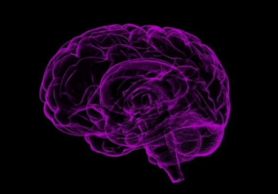 Moral decisions linked to brain activity: Study